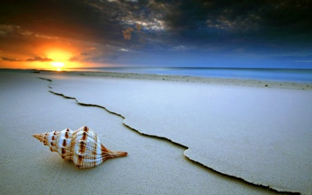 beautifull-shell-at-coast-wallpaper
