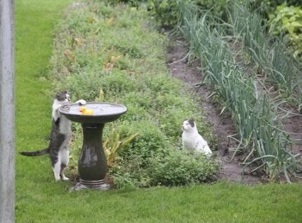 garden photo by lynn__