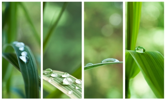 ID 55999282 © Neydtstock | Dreamstime.com Raindrops on bamboo leaves - collage