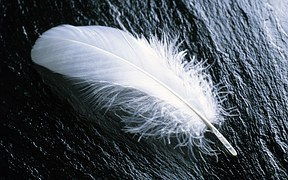 feather-967367__180