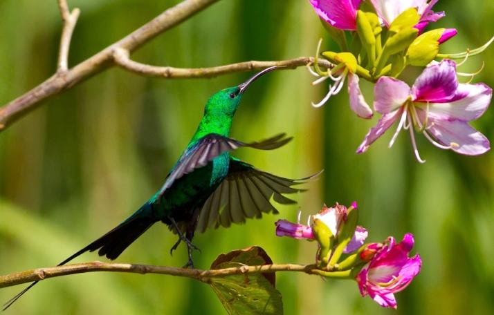 malachite-sunbird-louis-groenewald