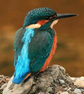 Kingfisher 45 (Noel Marry)