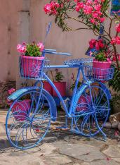 flower-3223718_1920