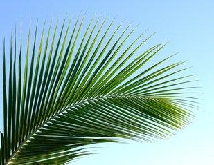 palm-leaf-1370948