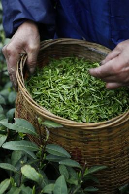 6539e09d6ef310d53e1ca36a21296020--tea-culture-tea-art