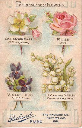 3dbc9515476b6a54a35dfdd2c7a1dcf6--vintage-diy-flower-vintage