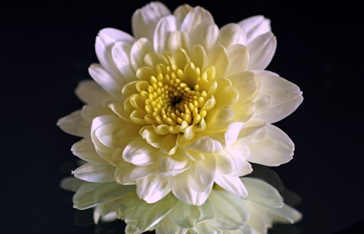 autumn_chrysanthemums_autumn_flower_aster_autumn_flowers_bloom_autumn_decoration_arrangement-492223.jpg!s