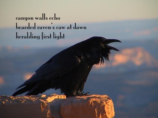 raven-2060767_6401