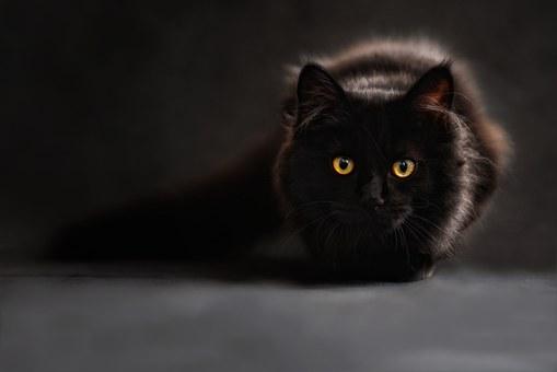 cat-694730__340