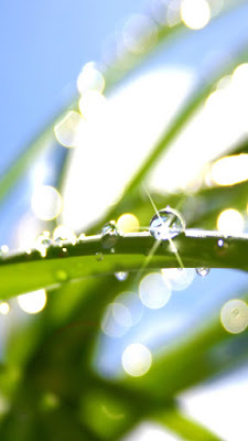shimmering dew